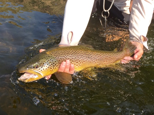 Five ways creating a great content strategy is like fly fishing in Montana